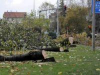 CHP'li Yalova Belediyesi 158 ağacı kesti!