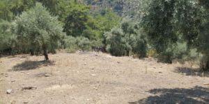Muğla, Milas'ta şüpheli ölüm