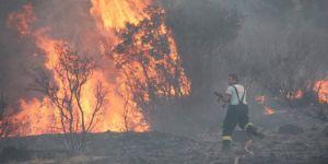 Bodrum'da 7 dönüm otluk ve makilik alan kül oldu