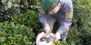 Rize'de Çay Bahçesinde Gizlenmiş 500 Gram Esrar Maddesi Ele Geçirildi