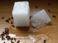 Evdeki karıncaları böyle yok edin