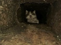 Havalandırma Boşluğunda Sıkışan Kedi Duvar Kırılarak Kurtarıldı