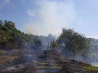 Kastamonu'da Bir Kişi Otları Yakarken Ormanı Tutuşturdu