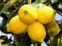 Türliye Ekşi Limondan Tatlı Gelir elde etti