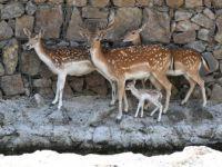 İzmirli Bambi ilgi odağı oldu