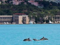 İstanbul Boğazı'nda Yunus balığı Sürprizi