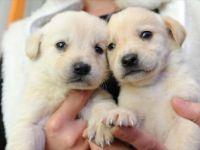 Petshoplarda Hayvan Satışına yasak!