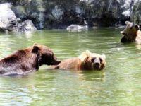 Adana'da Çukurova Sıcağı Hayvanları Da Vuruyor