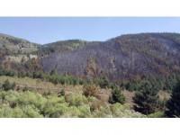 Erzurum'da 40 Hektar Ormanlık Alan Yandı