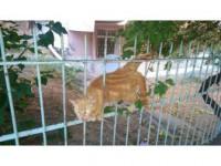 Demirlere Sıkışan Kediyi İtfaiye Kurtardı