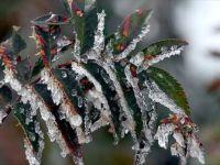 Meteorolojiden 5 İl İçin Don uyarısı! Buz kesecek