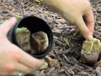 Sallama Çayı atmayıp Bahçeye Gömdü Öğrendiğinizde Sizde aynısını Yapacaksınız
