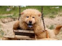 Kaçak Köpekler İhaleyle Satılacak