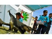 Tarım Ve Hayvanlarla İçe İçe Eğitim