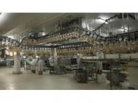 Rusya'ya 20 Bin Tonluk Tavuk İhracatı Yolda