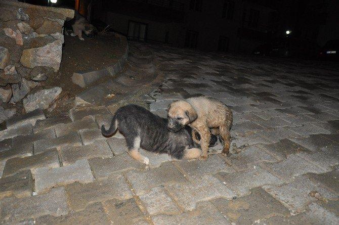 Foseptik Çukuruna Düşen Yavru Köpeği İtfaiye Kurtardı