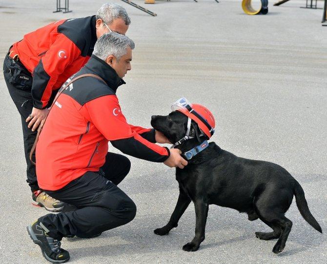5 Köpek Hayat Kurtarmak İçin Eğitiliyor