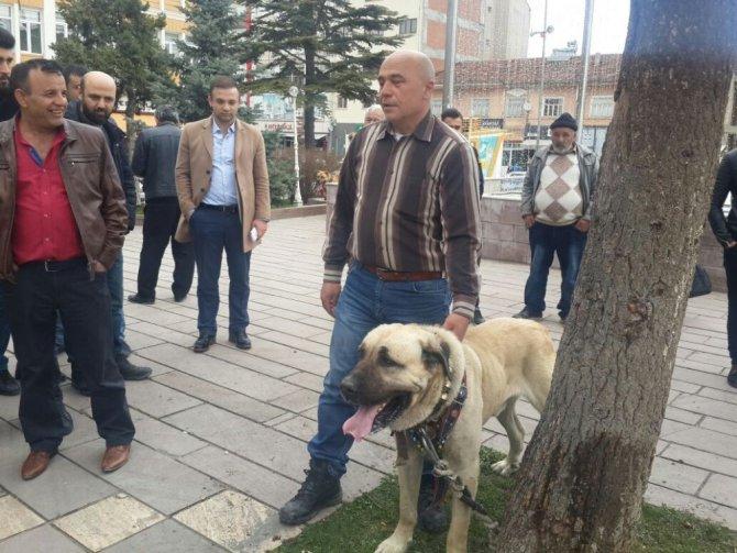 Hollanda'yı Kangal Köpekleri İle Protesto Ettiler