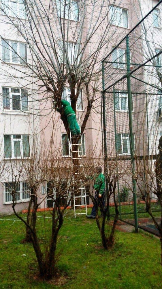İzmit'te Ağaç Budama Çalışması