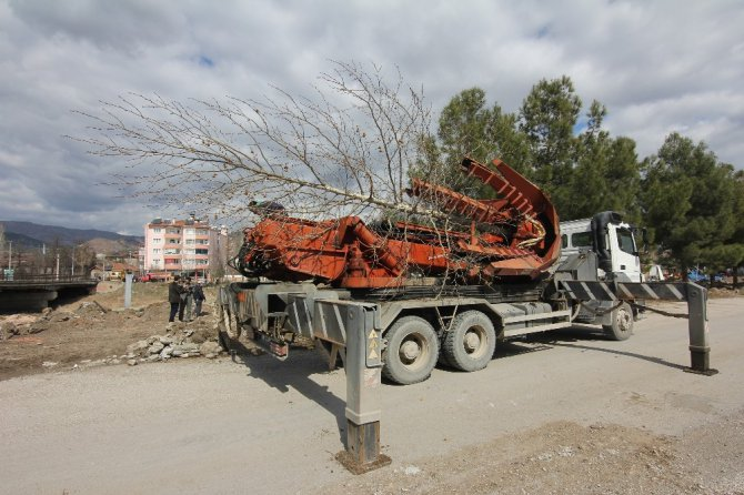 Osmancık'ta Kızılırmak Sahilindeki Ağaçlar Taşınıyor