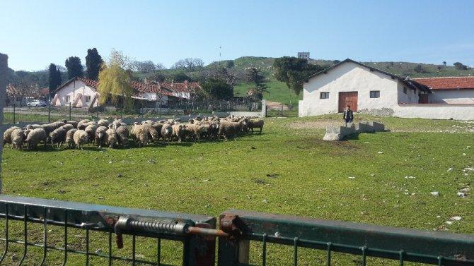 Çobanlara Uygulamalı Eğitim