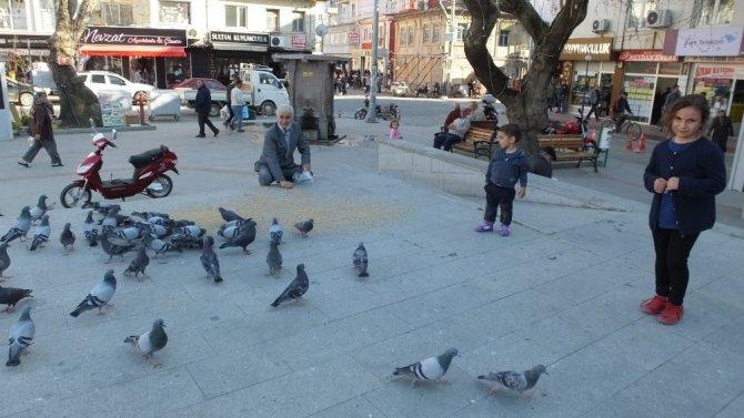 Burhaniye'de Güvercinler İlgi Odağı Oldu