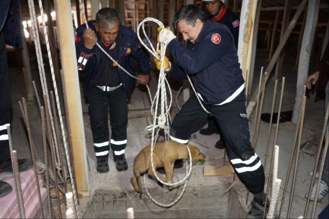 Asansör Boşluğuna Düşen Köpek Kurtarıldı