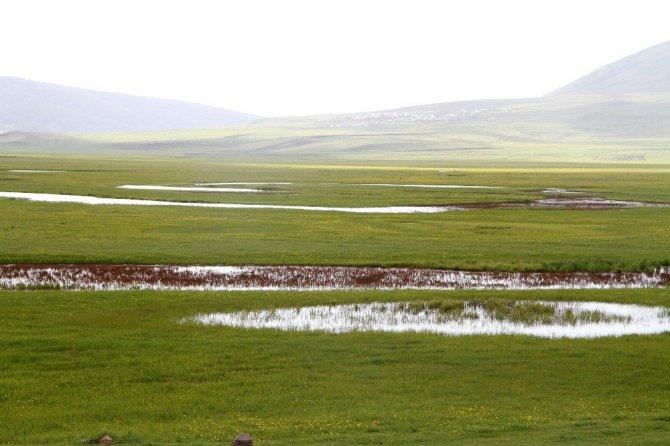 Ardahan Göle ovası yine mest ediyor