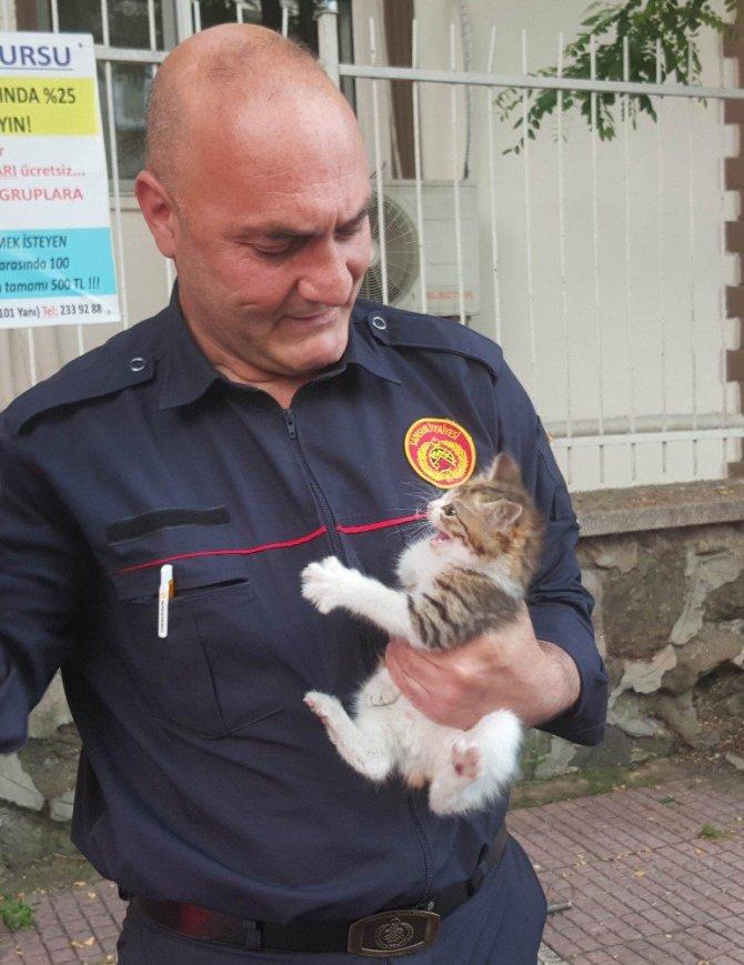 Samsun'da Ağaçta Mahsur Kalan Yavru Kediyi İtfaiye Kurtardı