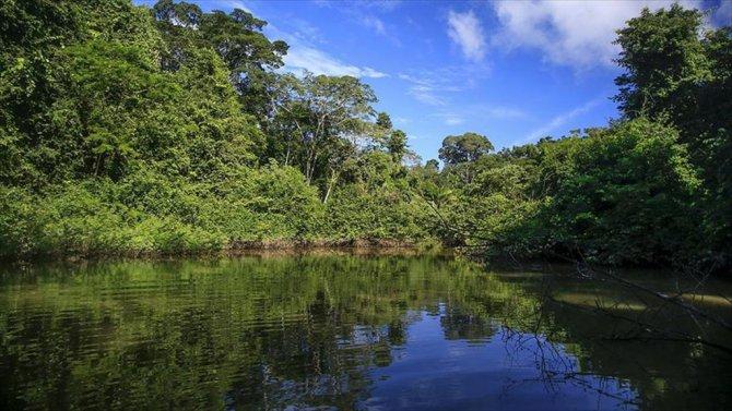 Amazon Ormanları için flaş keşif..