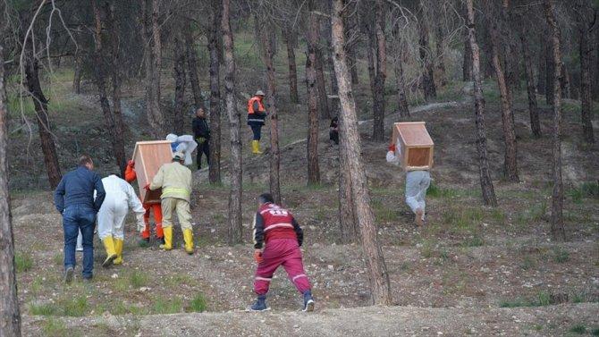 Kırmızı Karıncalar 'Yeni Görev Yerlerine' Taşındı